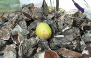 Oyster shells and lime